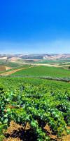 Vineyards on the hills around Marsala