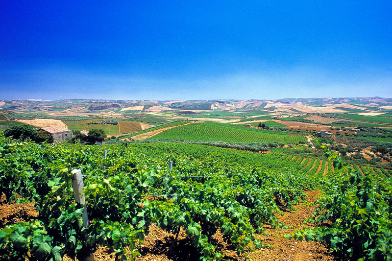 Vineyards on the hills around Marsala