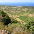 The cultivated plain of Ghirlanda in Pantelleria
